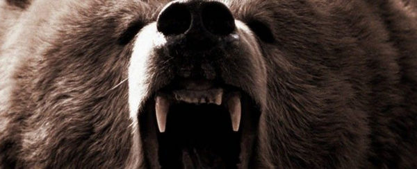 Into the Grizzly Maze pelicula