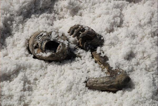 peliculas de terror bajo la sal