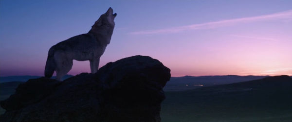 pelicula el ultimo lobo