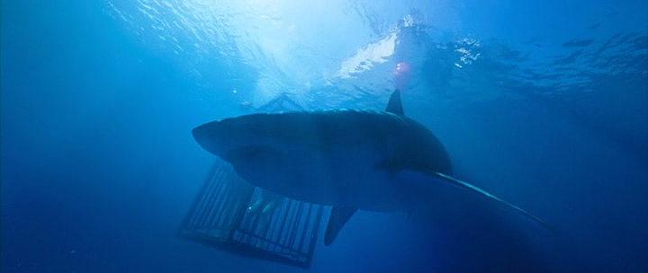 Pelicula In the Deep 2016