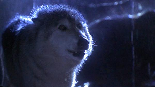 lobo 1994