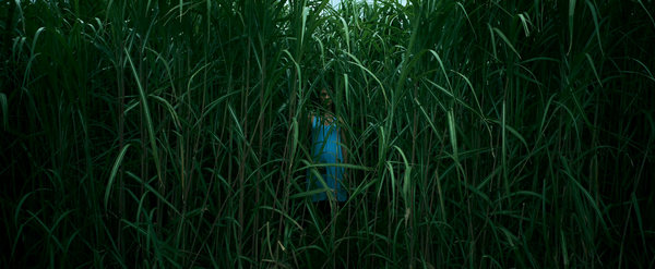 In The Tall Grass 2