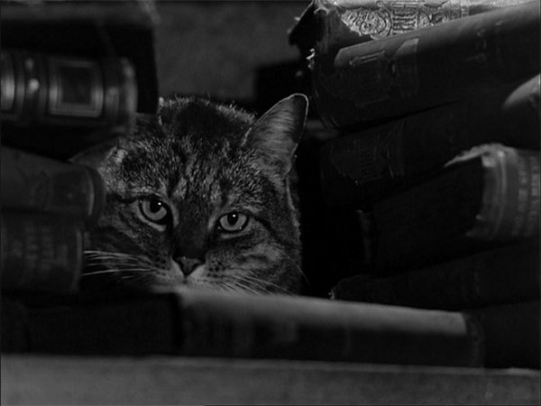 La sombra del gato The Shadow of the Cat 1961 2